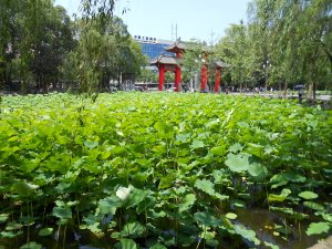 The lotus pond, at the entrance to the main gate, was another popular photo op for gradutes.