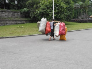 In competition with the Rivers, here is one of our campus elderly hauling their recyclables for pick-up at the front gate.