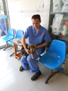 A very, very sick dog.  Here Dr. Mao  examines DP on his arrival to the clinic.