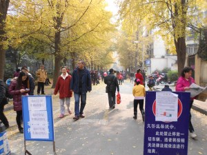 For one week, our sidestreets were closed  to vehicle traffic for safer gingko viewing by the public.