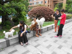 My Dog-walking Friends