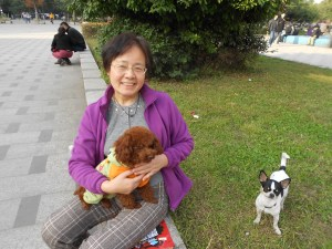 Ms. Zhao and 毛豆 (Hairy Bean), her poodle.  Chihuahua Little Beautiful Sister (小美妹)  looks on.