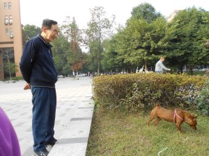 Mr. Wang really loves his miniature pinscher, Liang-liang.