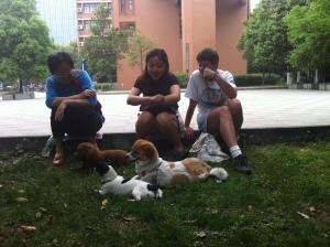 Ms Zhao, Sha-sha and I enjoy watching doggies at play.