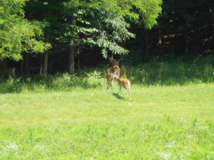 That beauty included the wildlife.  Seen here, a family of deer dashing into the woods