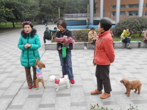 On January 12, I joined my Dog walking companions on the Sichuan University campus: Madame Zhao (curlers), Ms. Yang (center) and Mrs. Zhao (red)