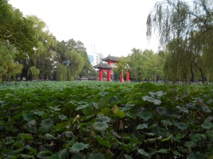 The Main Gate of Sichuan University, where I enjoyed sitting around the lotus pond during my visit.